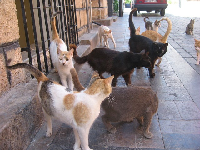 Feral Cats and Compassion