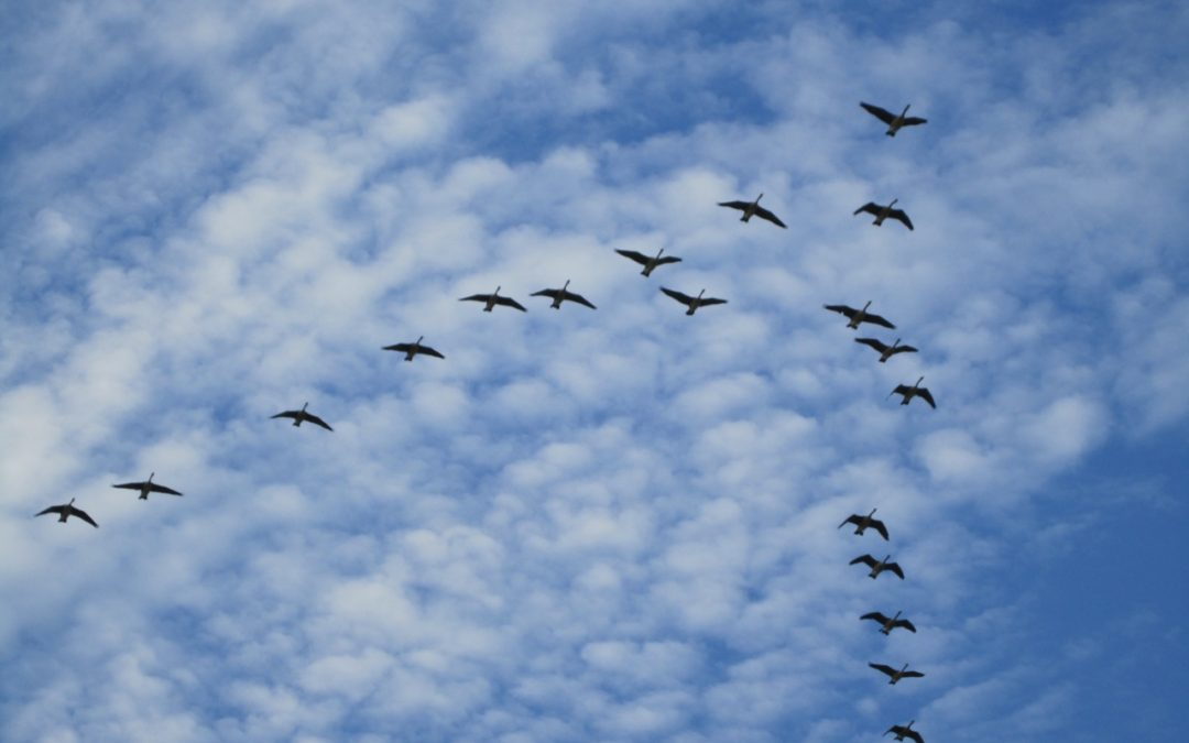 Lessons from the Flying Geese