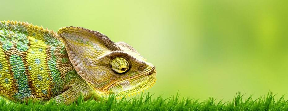 What Color is a Chameleon?