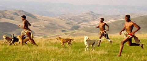 How the Dog Became Man's Friend