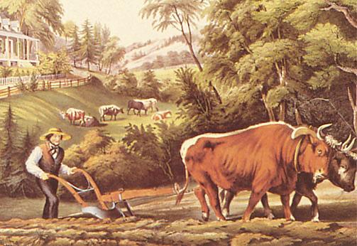 Refractory Oxen