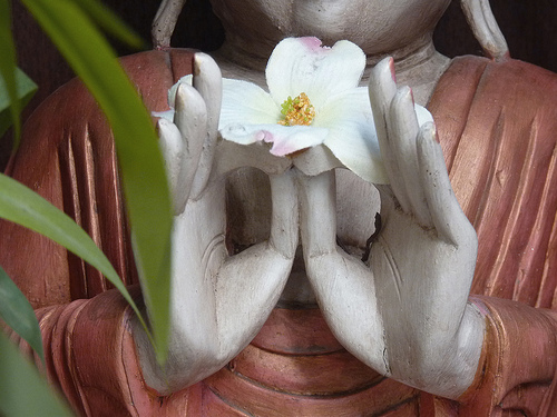 Don't Miss the Flower – A Short Zen Story from Thich Nhat Hanh