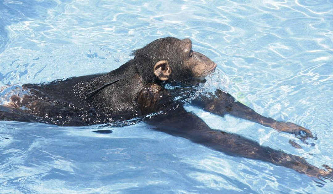 """Poem: """"To Help the Monkey Cross the River,"""" by Thomas Lux"""