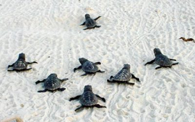 """Poem: """"The Revolt of the Turtles,"""" by Stephen Dunn"""