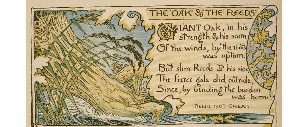 The Oak and the Reeds