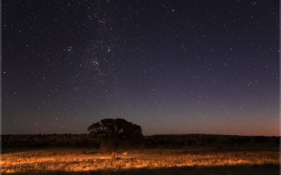 """Poem: """"The Silence of the Stars,"""" by David Wagoner"""